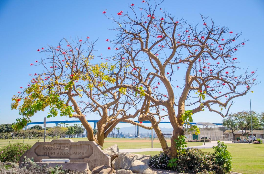 Two trees welcome visitors to Coronado Tidelands Park