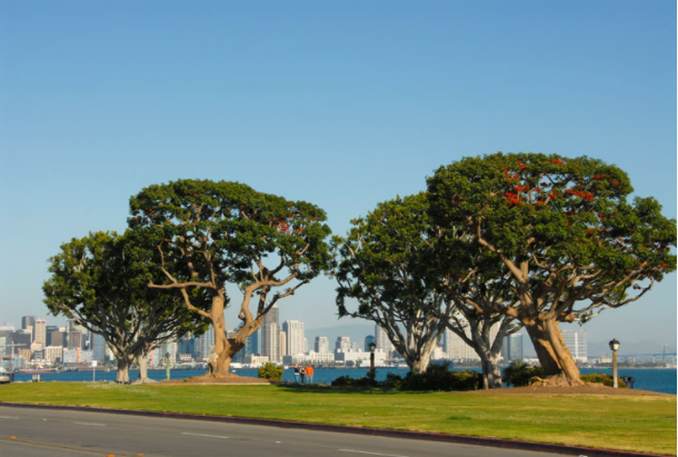 Harbor Island Park