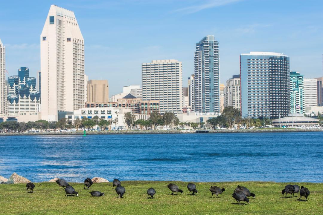 Birds on grass with Downtown cityscape in the background at Coronado Landing Park at the Port of San Diego
