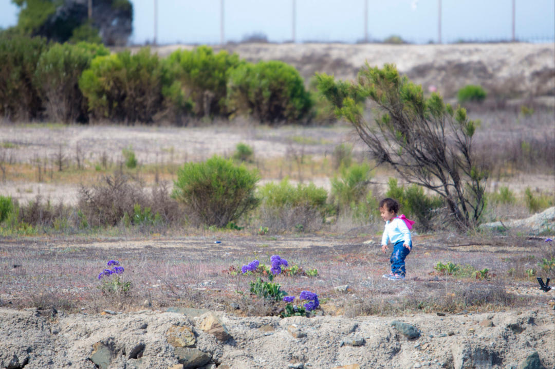 a child walks along the bayfront at an environmental cleanup event