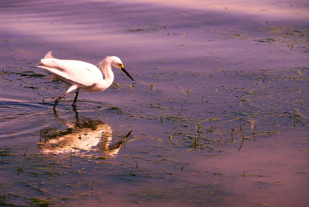 a bird wades through the water at the Port of San Diego