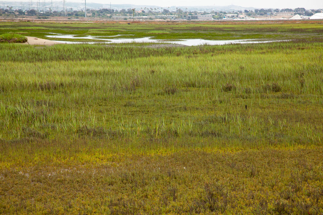 Environmental Wetlands