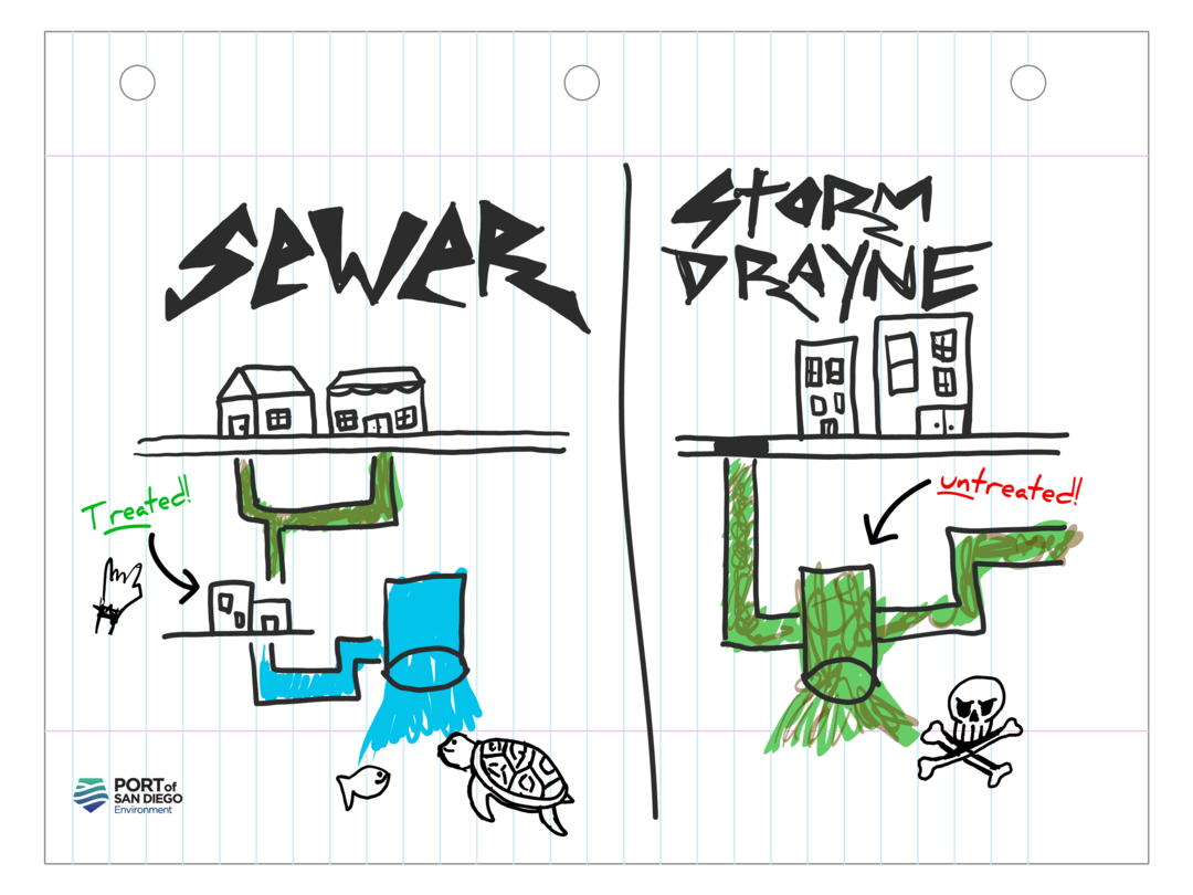 An illustration showing the difference between sewer and storm drains. Sewer drains lead to treatment facilities and storm drains lead into the bay.