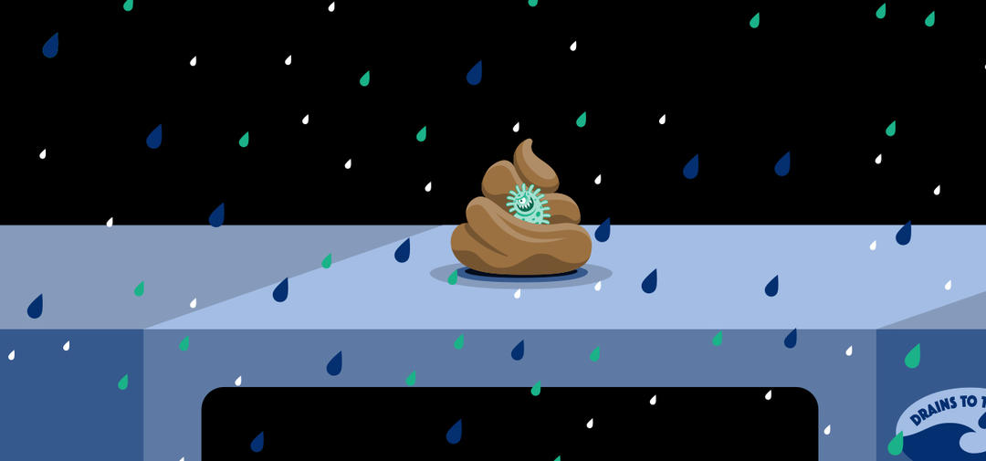 a cartoon of animal waste shows bacteria going into the storm drain