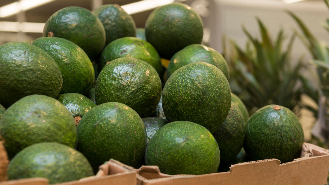 a box full of green avocados at the Port of San Diego Tenth Avenue Marine Terminal