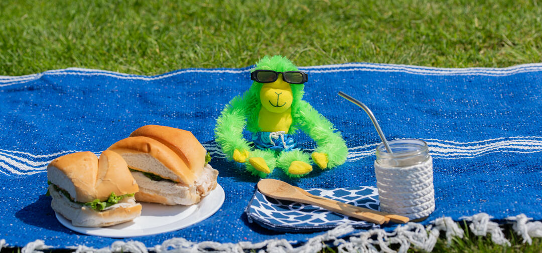 Hang on Hank at a zero waste picnic with a sandwich and re-usable items