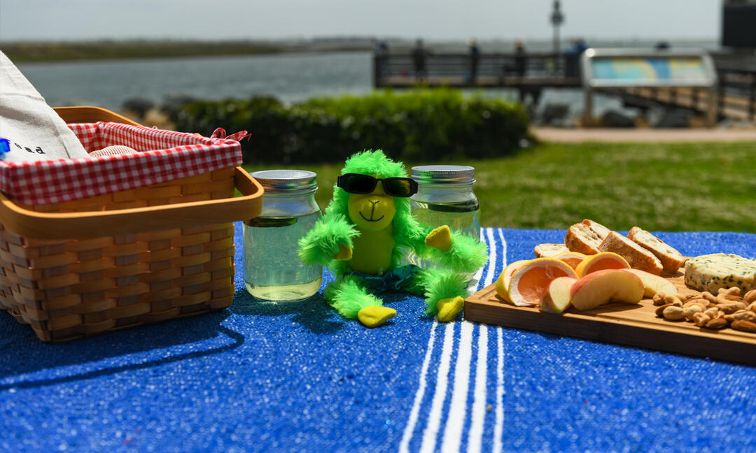Han on Hank - a green monkey - is on a blanket with a picnic basket