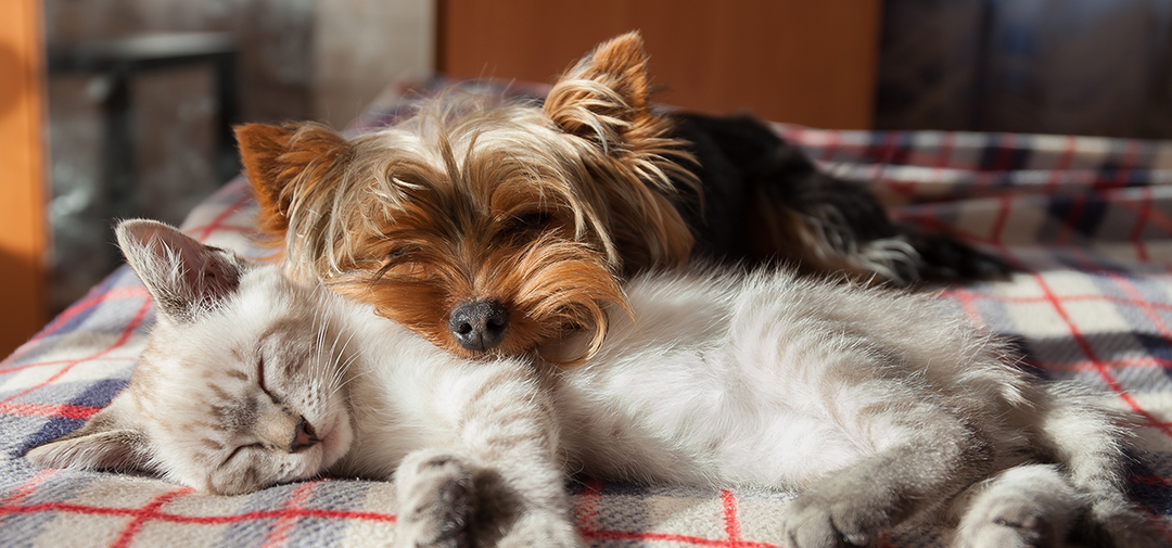 a kitten and puppy snuggle together for a better environment