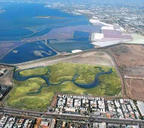 Rendering of a proposed project to create a wetland mitigation bank on a portion of a site known as Pond 20 in South San Diego Bay.