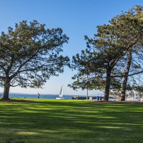 Grass and trees at Chula Vista Bayfront Park at the Port of San Diego