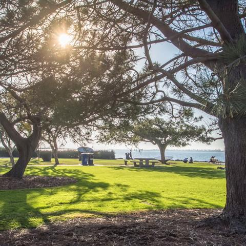 Trees and grass at Chula Vista Bayfront Park at the Port of San Diego