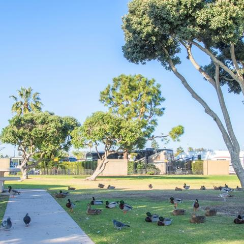 Birds on the grass near trees and a picnic table at Chula Vista Bayside Park at the Port of San Diego