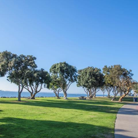 Trees, grass, and walkway at Chula Vista Bayside Park at the Port of San Diego