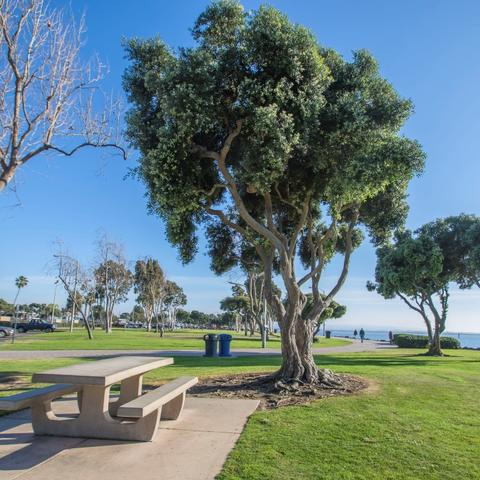 Picnic table, trees, and grass at Chula Vista Bayside Park at the Port of San Diego