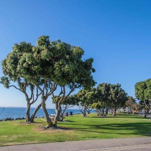 Trees, grass, and blue skies at Chula Vista Bayside Park at the Port of San Diego