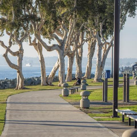 Path, benches, trees, grass at Embarcadero Marina Park South at the Port of San Diego