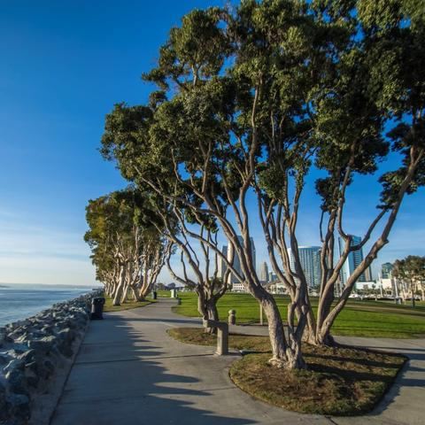 Trees at Embarcadero Marina Park South at the Port of San Diego
