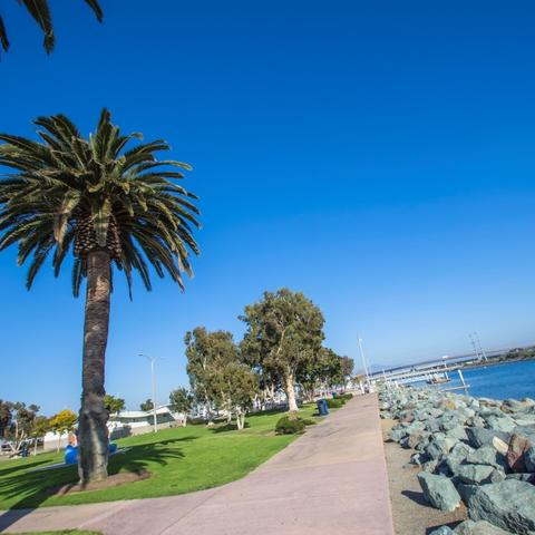 Tree-lined path along the water with bright blue skies at Pepper Park at the Port of San Diego