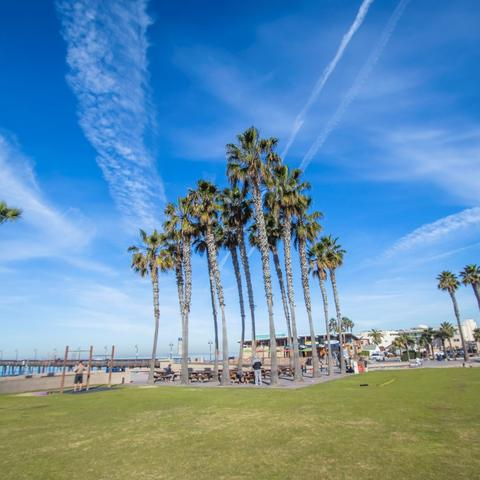 Palm trees, grass, and blue skies at Portwood Pier Plaza at the Port of San Diego