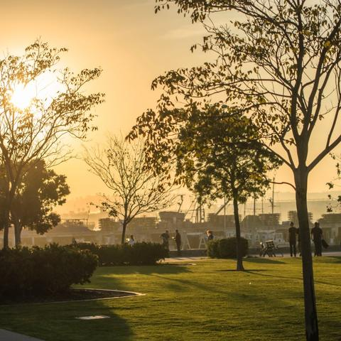 Trees and grass with orange-yellow skies at Ruocco Park at the Port of San Diego