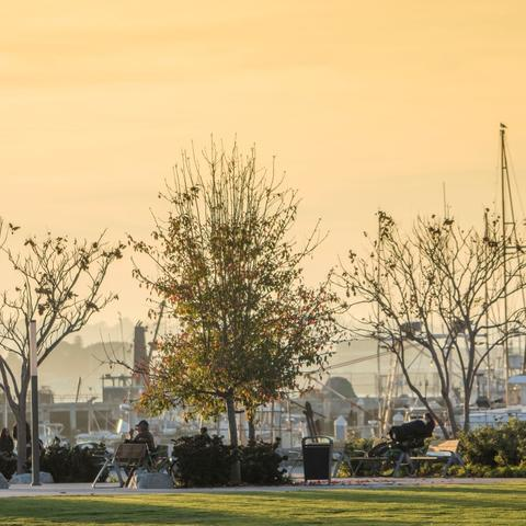 People sitting on benches under trees, with orange-yellow skies and marina in the background at Ruocco Park at the Port of San Diego