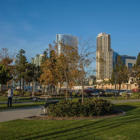 Tree-lined walkway and green grass at Ruocco Park at the Port of San Diego